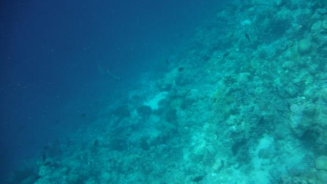 Fotos de baixo d'água são difíceis minha gente! :P